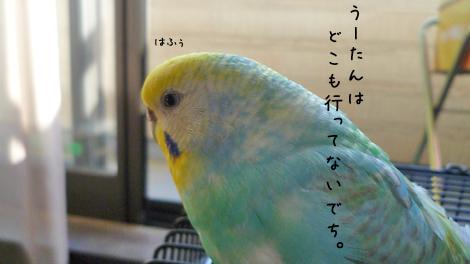 うーたんのご挨拶2.jpg