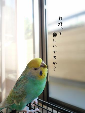 うーたんのご挨拶3.jpg