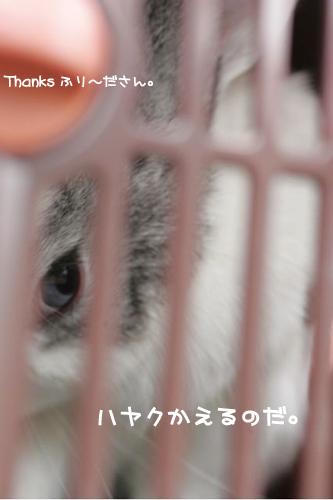 ふり~ださん13のコピー.jpg
