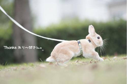 ふり~ださん4のコピー.jpg