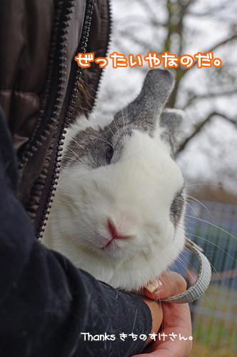 吉さん3のコピー.jpg