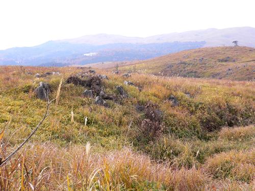 山口9.jpg