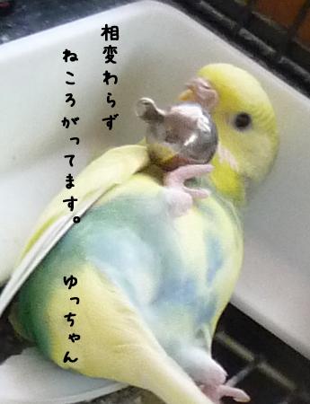 相変わらずのゆっちゃん.jpg